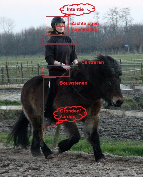 De fundamenten en basisprincipes van Centered Riding: aarden,intentie, centreren, bouwstenen, ademhaling, zachte ogen