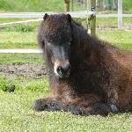 Controle over … of verbinding met je paard