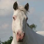 Marco (Spookje) mijn wonderpaard