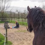 Opstellingen met materialen bij de paarden