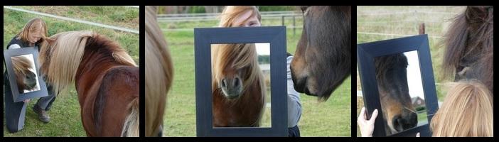 Paard als spiegel