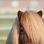 Hoogsensitief en paarden